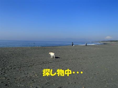 P3160029_3