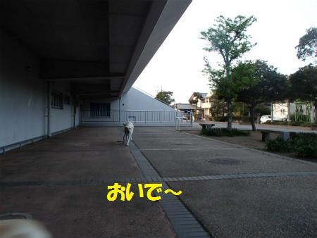 P4180049