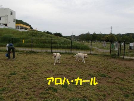 P5190071_2