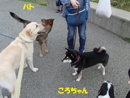 P6110141