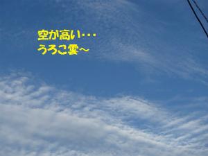 P8070034_2