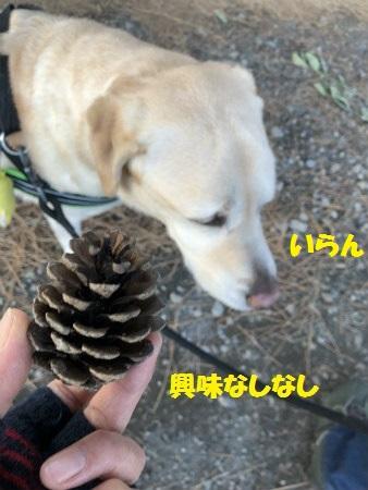 Img_2459_2