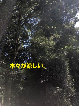 Img_1501